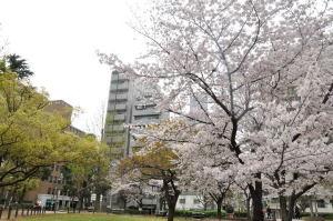 170410桜
