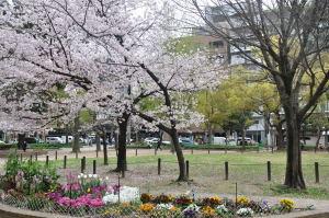 170410桜②